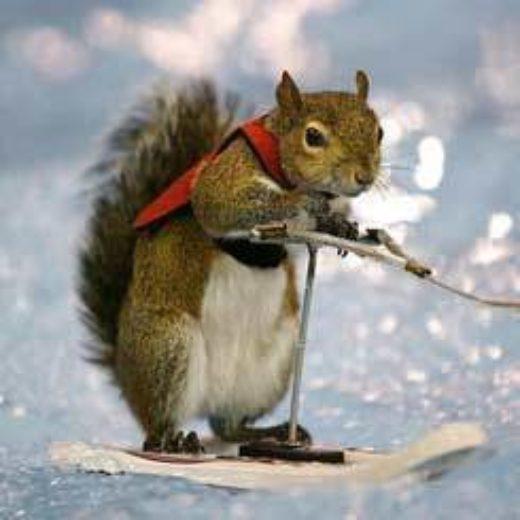 Squirrel 245 Feature